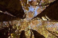 IL-TERRITORIO_Flora_trees