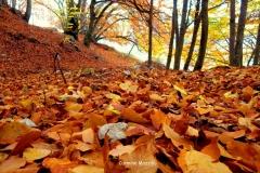 Il-TERRITORIO_Flora_foglie
